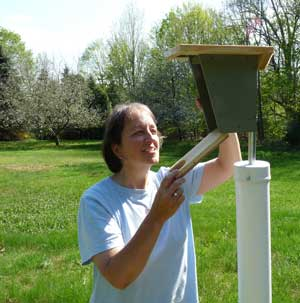 Bet Zimmerman monitoring a nestbox