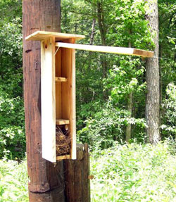 Nestbox for flying squirrels.  Keith Kridler photo
