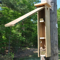 Sialis picture of the week TUTI nesting in flying squirrel box