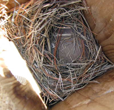 Bluebird nest at Taylor Brooke.