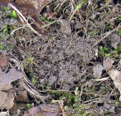 dirt in TUTI nest. Photo by Bet Zimmerman
