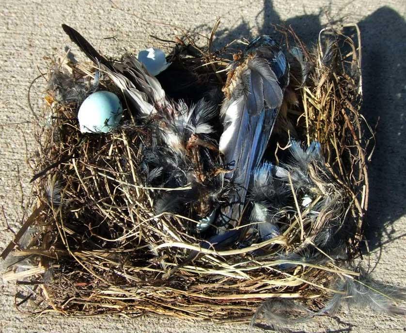 Bluebird Conservation