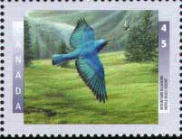 Mountain bluebird on Canadian stamp 1997