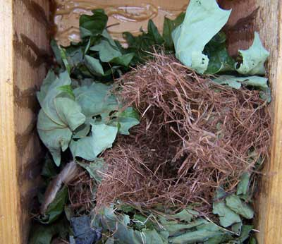 Flying squirrel nest or roost in box.  Photo by Bet Zimmerman.