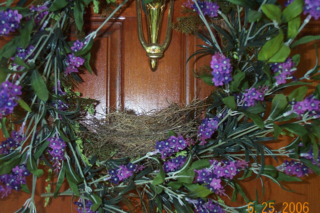 House Finch nest in wreath. Photo by D. Ulloa.