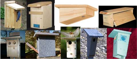 Bluebird Nestbox Styles Pros and Cons