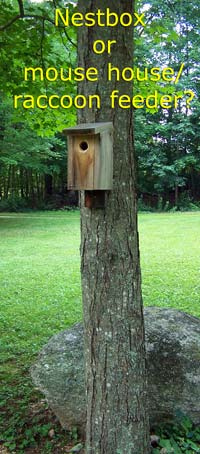 Nestboxes mounted on trees often increase the odds of predation. Photo by E Zimmerman.