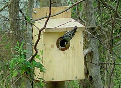 WBNU nestbox.  Photo by Paul Murray