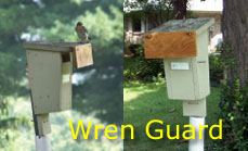 Wren Guard, side and front view. Photo by Loren Hughes, on a Hughes Slot Box.
