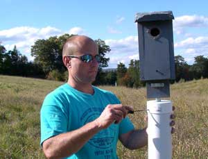 My husband puts a wobbling baffle on a nestbox.  Photo by EA Zimmerman